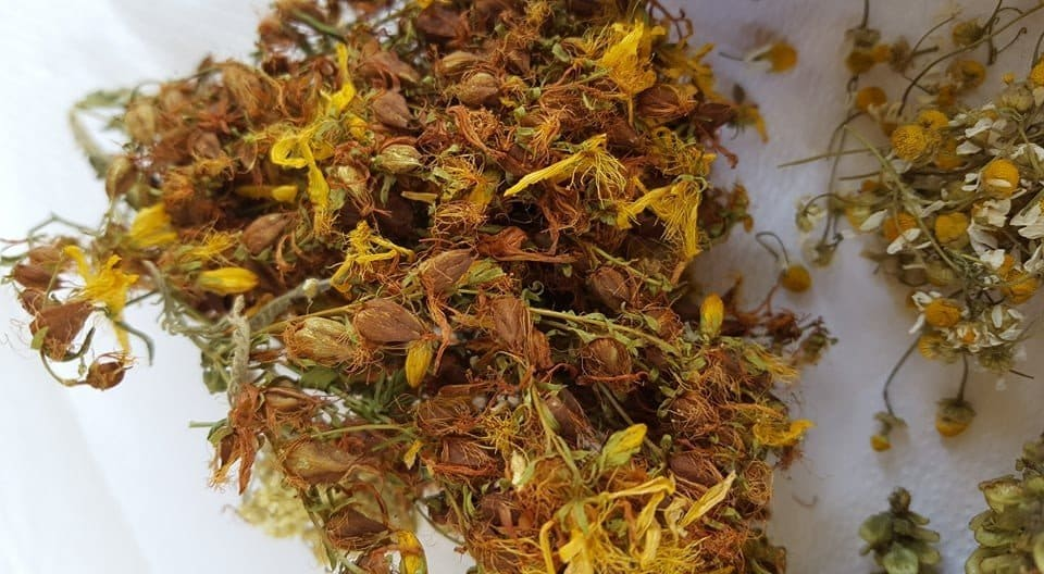 St.John's Wort dried on a white background for tea.