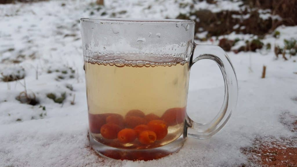 Rosehip Tea in cup outside.