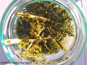 10 Stinging Nettle Recipes and Uses