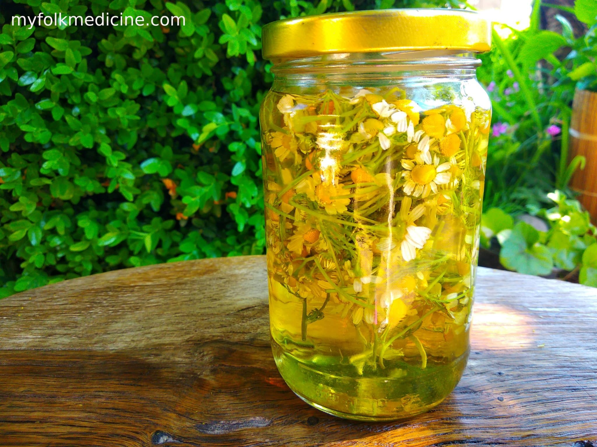 How To Make Chamomile Tincture at Home?