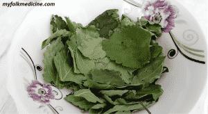 Lemon Balm Plant, Health Benefits, Uses, Dosing, and Interactions