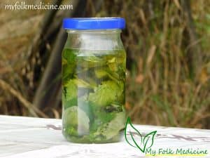 Lemon Balm Infused Oil Recipe