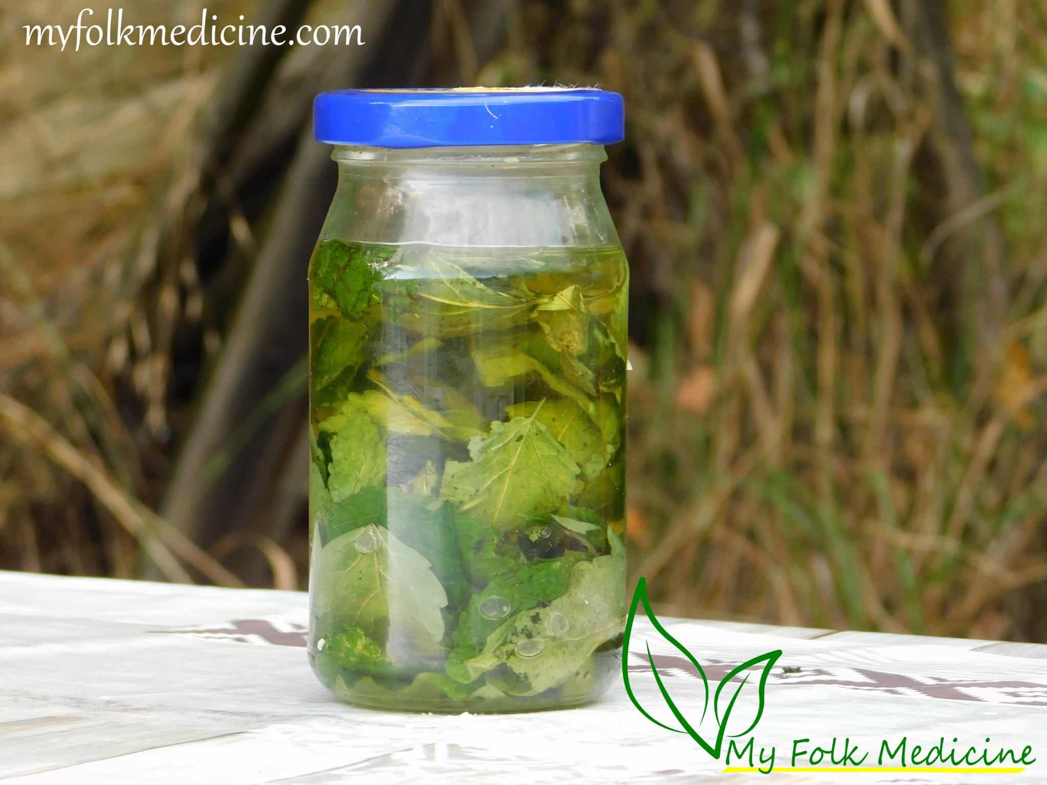 Lemon Balm Infused Oil Recipe
