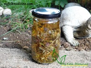 Thyme Tincture Recipe – Used for Dry Cough and Bronchitis