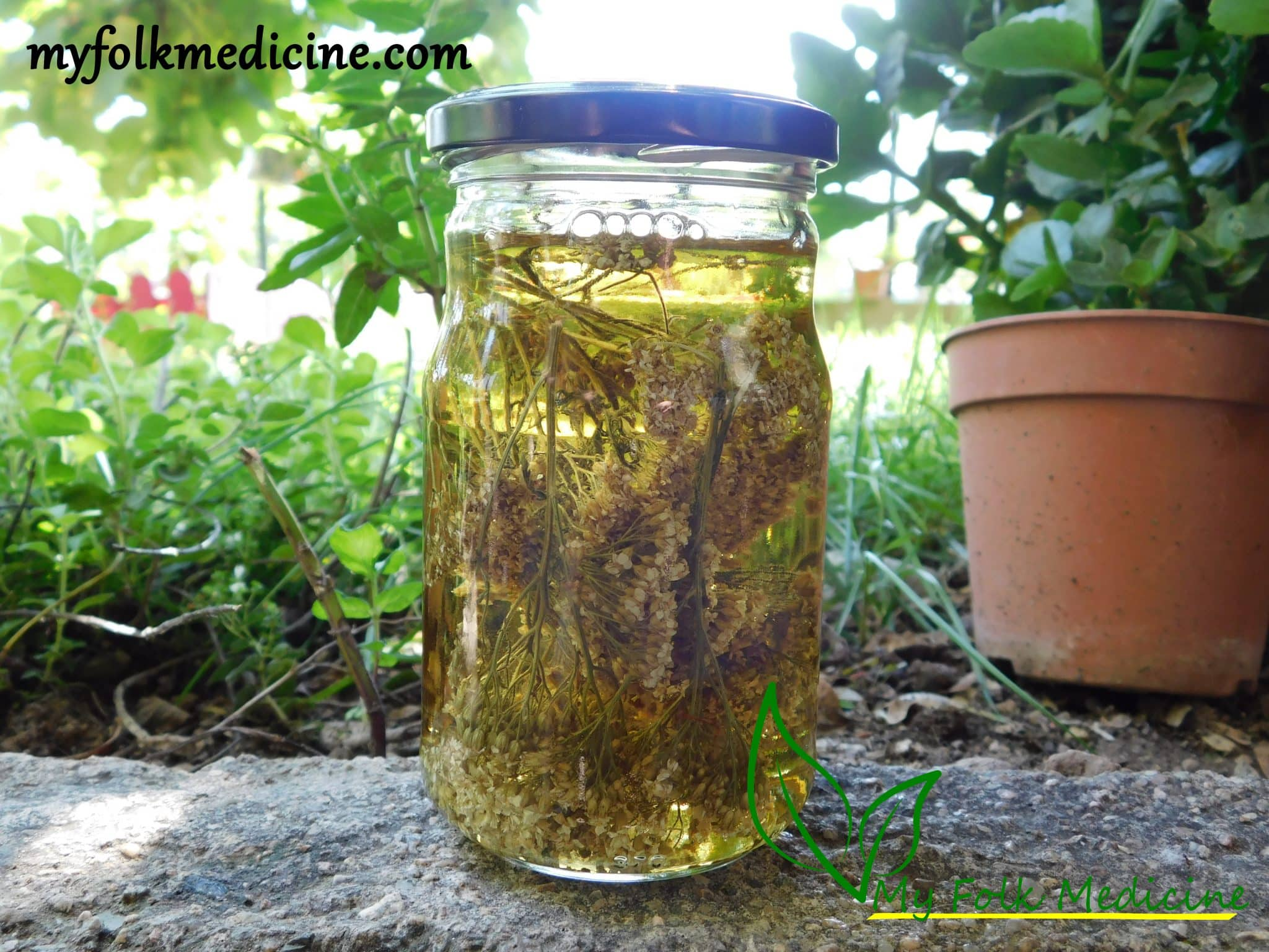 Yarrow Tincture Recipe and Its 6 Uses